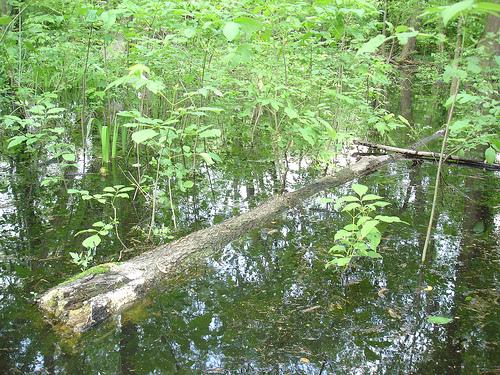 Swimming tree log by Merfam